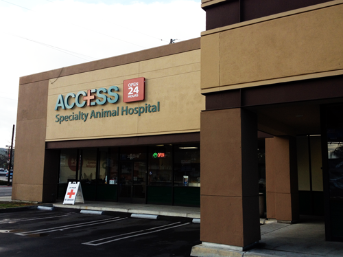 Access Woodland Hills >> Woodland Hills Practice Eye Care For Animals Eye Care