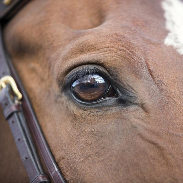 horse-big